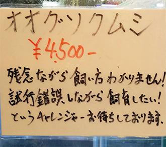 mushi-03.jpg